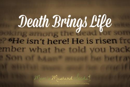Death Brings Life